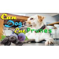 Can Dogs Eat Prunes For Constipation